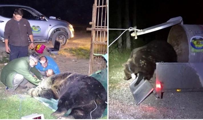 Lőhetők a veszélyes medvék Székelyföldön
